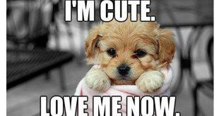 love meme dog