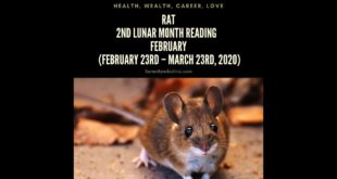 Rat Monthly Horoscope for Second Lunar Month 2020 Intuitive Astrology Tarot