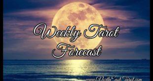 Capricorn ♑️ Weekly Tarot Forecast 🌻🌞✨